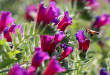 جشنواره «فناوری و نوآوری در زنجیره ارزش گیاهان دارویی» برگزار میشود