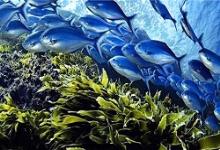 توسعه پایدار منابع دریایی محقق می شود